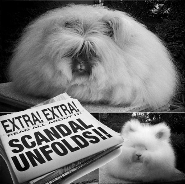 angora-rabbit.jpg_effected