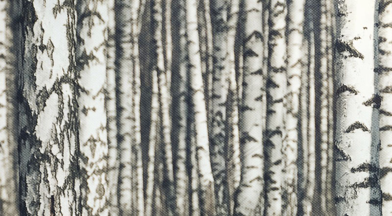birch-forest