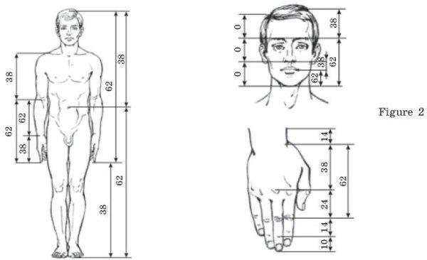 human-body-golden ratio