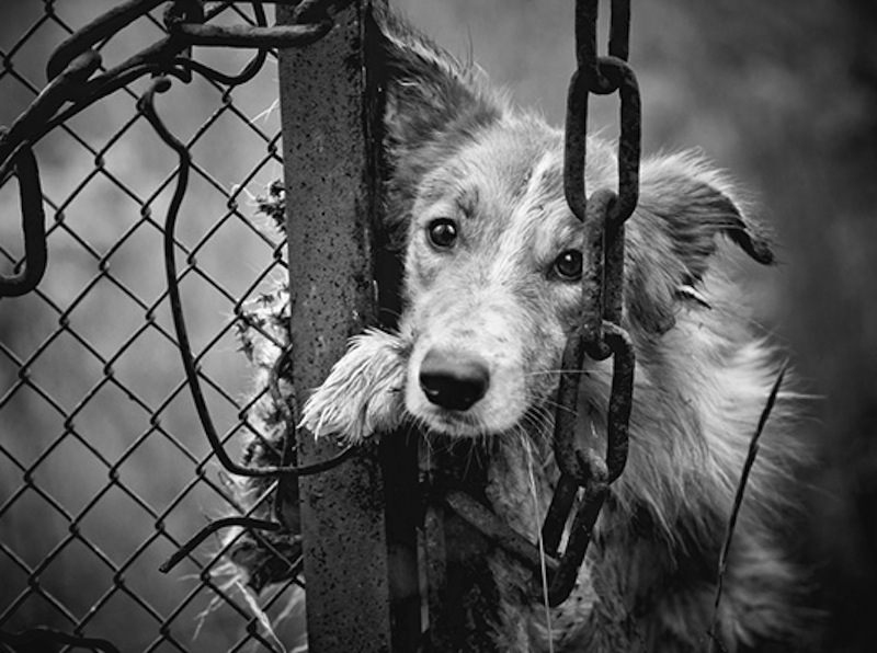 fashion, china, PETA, animal cruelty, dog, leather