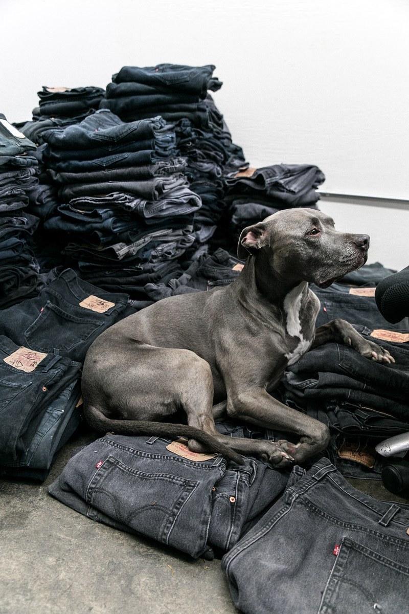 ReDone factory dog