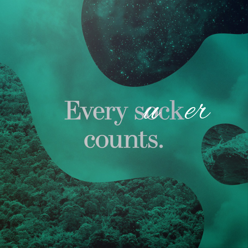 every sucker counts